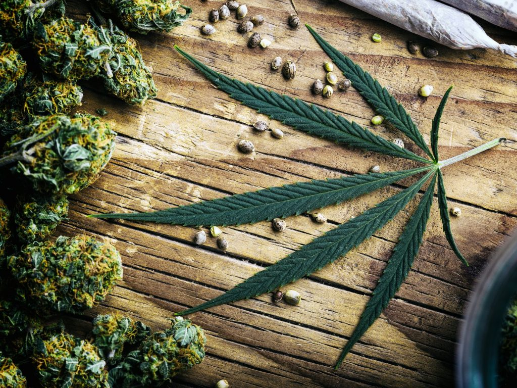 Cannabis Use And Youth